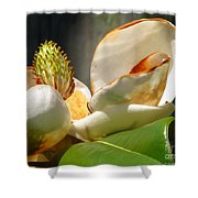 Magnolia Sunburn Shower Curtain
