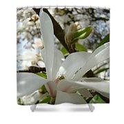 Magnolia Tree Flowers Art Prints White Magnolia Flower Shower Curtain