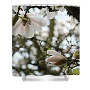 Magnolia Tree Flowers Pink White Magnolia Flowers Spring Artwork Shower Curtain