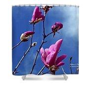 Magnolia Tulip Tree Shower Curtain