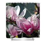 Magnolias Are Blooming Shower Curtain