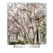 Magnolias In Back Bay Shower Curtain