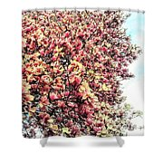 Magnolias In Bloom Shower Curtain
