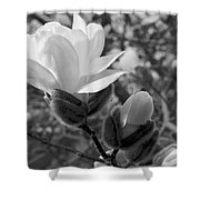 Magnolias In Spring Shower Curtain