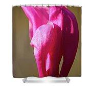 Magnolia's Torch Shower Curtain