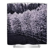 Magnolias In Llewellyn Park, West Orange, New Jersey Shower Curtain