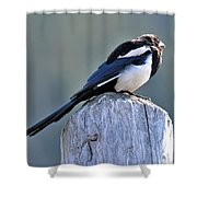 Magpie In The Sun Shower Curtain