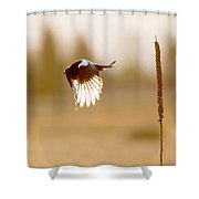 Magpie Wings Of Light Shower Curtain