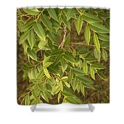 Mahogany Leaves On A Branch Shower Curtain