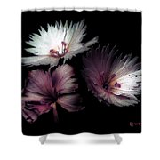 Maiden  Mother Crone Shower Curtain