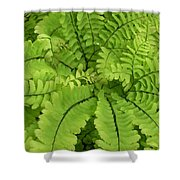 Maidenhair  Shower Curtain
