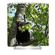 Maine Black Bear Cub In Tree Shower Curtain