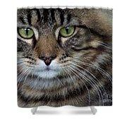 Maine Coon Cat Portrait Shower Curtain