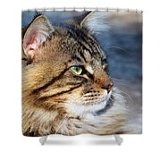 Maine Coon II Shower Curtain