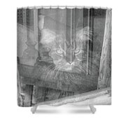 Maine Coon In Window Shower Curtain