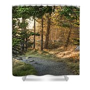 Maine Forest At Dusk Shower Curtain