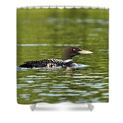 Maine Loon 5 Shower Curtain