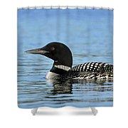 Maine Loon Shower Curtain