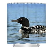 Maine Loon Shower Curtain