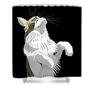 Mainecoon Shower Curtain