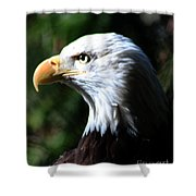 Majestic Bald Eagle Shower Curtain