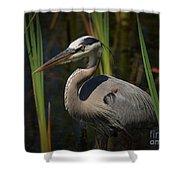 Majestic Bird Shower Curtain