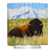 Majestic Buffalo  Shower Curtain