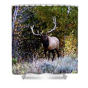 Majestic Bull Elk Survivor In Colorado  Shower Curtain