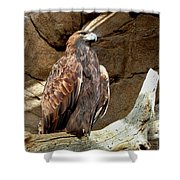 Majestic Eagle Shower Curtain