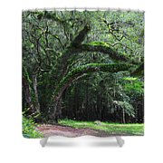 Majestic Fern Covered Oak Shower Curtain