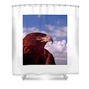 Majestic Golden Eagle Shower Curtain