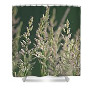Majestic Grass Shower Curtain