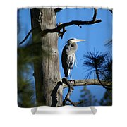 Majestic Great Blue Heron 1 Shower Curtain