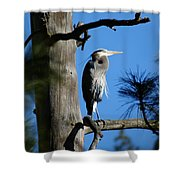 Majestic Great Blue Heron 2 Shower Curtain