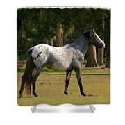 Majestic Horse Shower Curtain