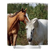 Majestic Horse Ride Shower Curtain