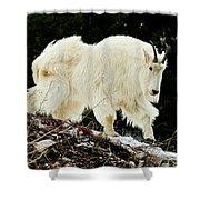 Majestic Mountain Goat Shower Curtain
