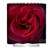 Majestic Rose Shower Curtain