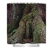 Majestic Tree Trunk Shower Curtain