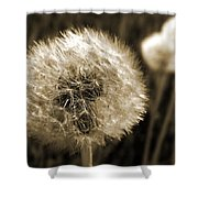 Make-a-wish Dandelion Sepia Shower Curtain