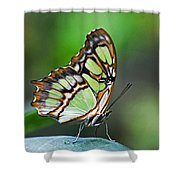 Malachite Butterfly Shower Curtain