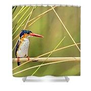 Malachite Kingfisher On Watch Shower Curtain