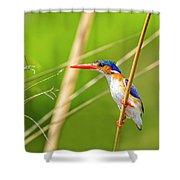Malachite Kingfisher On The Hunt Shower Curtain