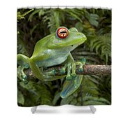 Malagasy Web-footed Frog Boophis Luteus Shower Curtain
