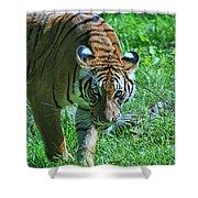 Malayan Tiger # 2 Shower Curtain