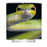 Malayan Vine Snake Shower Curtain