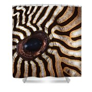 Malaysia Pufferish Eye Shower Curtain