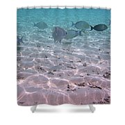 Maldives School Of Tropical Fish Shower Curtain