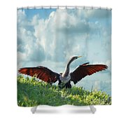 Male American Anhinga  Shower Curtain