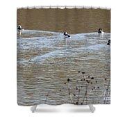 Male And Female Bufflehead Ducks  Shower Curtain